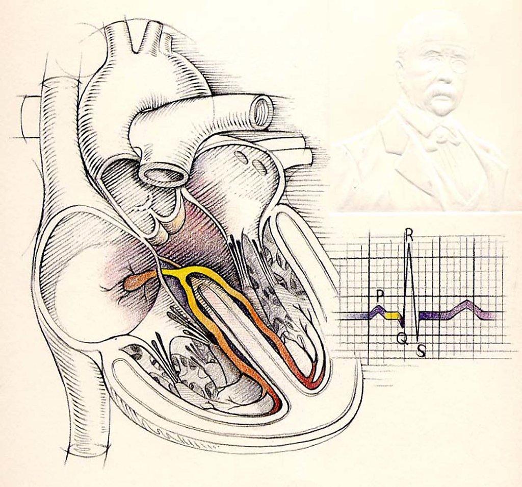 Hofkin-Hedge-heart6aH.jpg