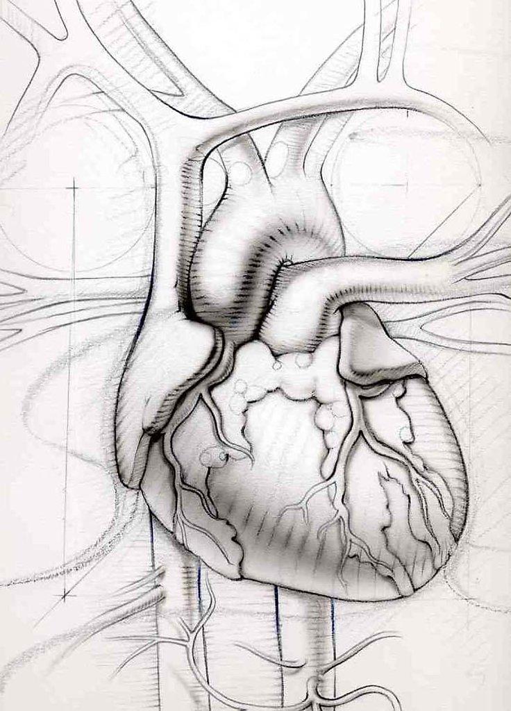 Hofkin-Hedge-Heart4H.jpg
